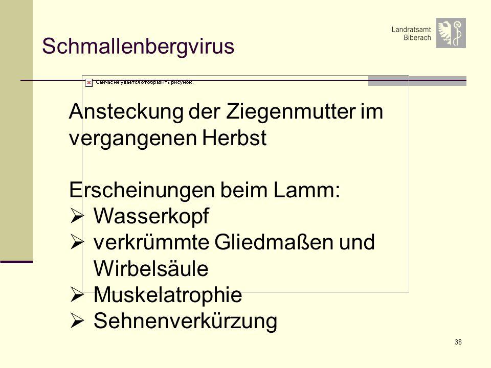 38 Schmallenbergvirus Ansteckung der Ziegenmutter im vergangenen Herbst Erscheinungen beim Lamm: Wasserkopf verkrümmte Gliedmaßen und Wirbelsäule Muskelatrophie Sehnenverkürzung