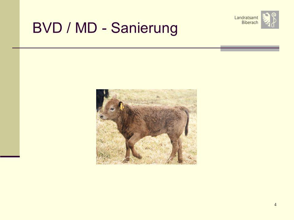 4 BVD / MD - Sanierung