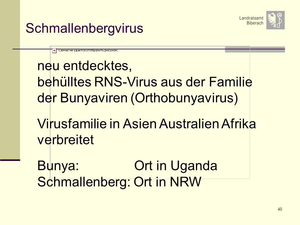 40 Schmallenbergvirus neu entdecktes, behülltes RNS-Virus aus der Familie der Bunyaviren (Orthobunyavirus) Virusfamilie in Asien Australien Afrika verbreitet Bunya: Ort in Uganda Schmallenberg: Ort in NRW