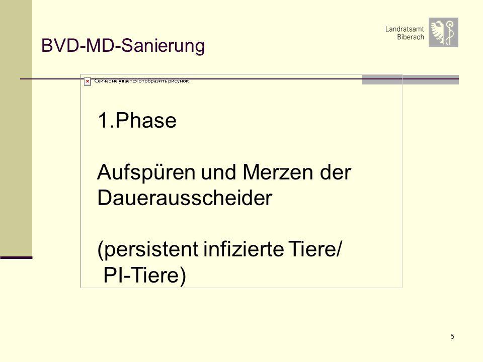 5 BVD-MD-Sanierung 1.Phase Aufspüren und Merzen der Dauerausscheider (persistent infizierte Tiere/ PI-Tiere)