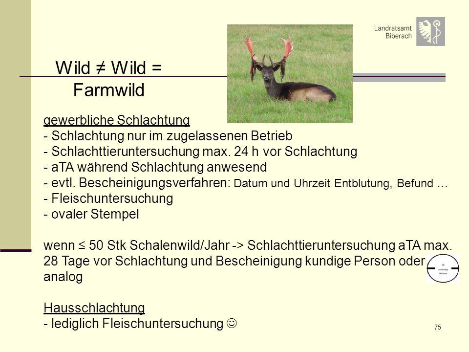 75 gewerbliche Schlachtung - Schlachtung nur im zugelassenen Betrieb - Schlachttieruntersuchung max. 24 h vor Schlachtung - aTA während Schlachtung an