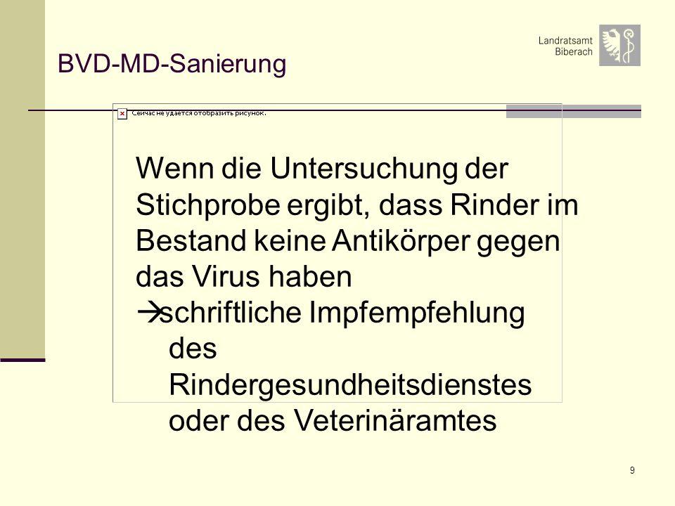 9 BVD-MD-Sanierung Wenn die Untersuchung der Stichprobe ergibt, dass Rinder im Bestand keine Antikörper gegen das Virus haben schriftliche Impfempfehlung des Rindergesundheitsdienstes oder des Veterinäramtes