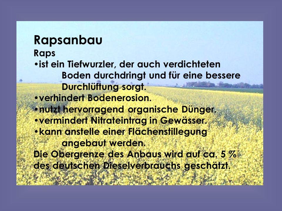 Rapsanbau Raps ist ein Tiefwurzler, der auch verdichteten Boden durchdringt und für eine bessere Durchlüftung sorgt. verhindert Bodenerosion. nutzt he