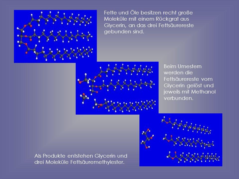 Fette und Öle besitzen recht große Moleküle mit einem Rückgrat aus Glycerin, an das drei Fettsäurereste gebunden sind. Beim Umestern werden die Fettsä