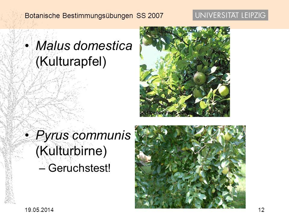 Botanische Bestimmungsübungen SS 2007 19.05.201412 Malus domestica (Kulturapfel) Pyrus communis (Kulturbirne) –Geruchstest!