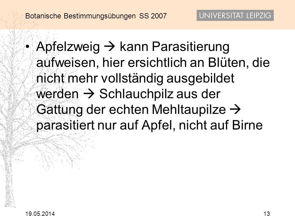 Botanische Bestimmungsübungen SS 2007 19.05.201413 Apfelzweig kann Parasitierung aufweisen, hier ersichtlich an Blüten, die nicht mehr vollständig aus