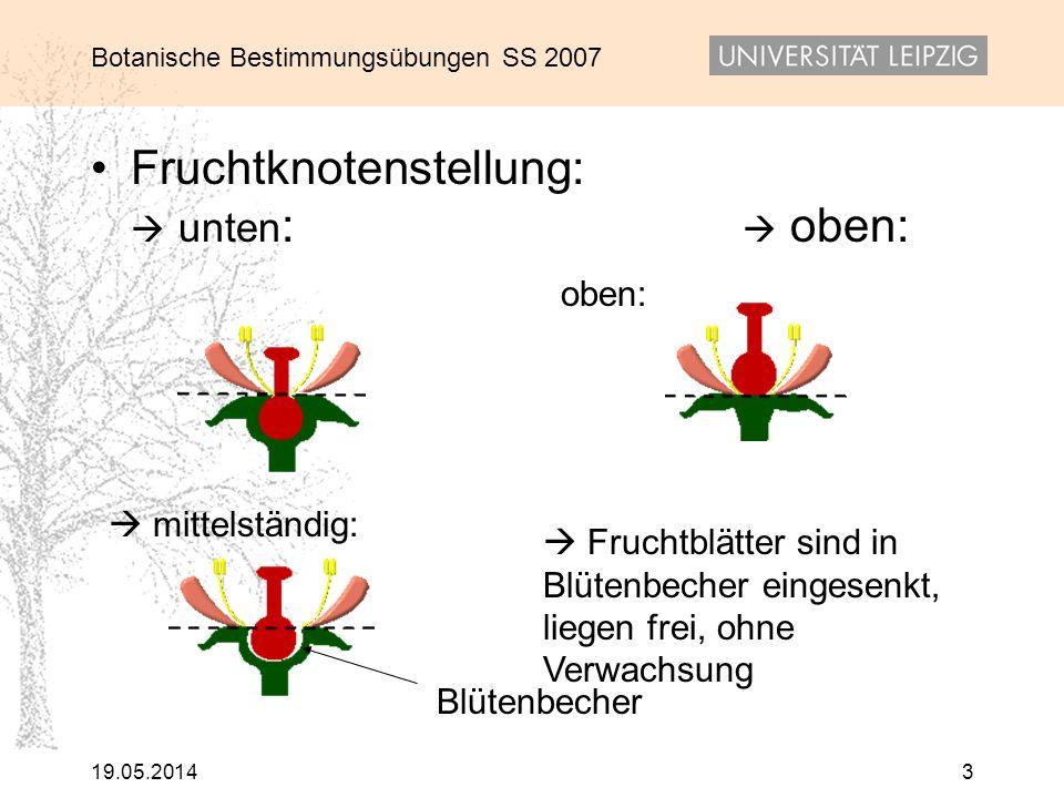 Botanische Bestimmungsübungen SS 2007 19.05.20143 Fruchtknotenstellung: unten : oben: oben: Blütenbecher Fruchtblätter sind in Blütenbecher eingesenkt