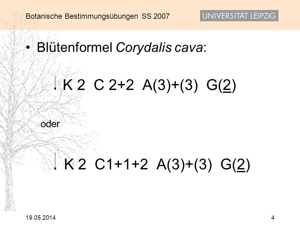 Botanische Bestimmungsübungen SS 2007 19.05.20144 Blütenformel Corydalis cava: K 2 C 2+2 A(3)+(3) G(2) oder K 2 C1+1+2 A(3)+(3) G(2)
