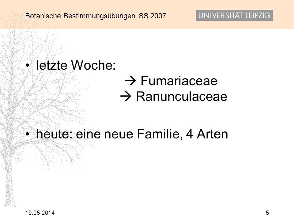 Botanische Bestimmungsübungen SS 2007 19.05.20145 letzte Woche: Fumariaceae Ranunculaceae heute: eine neue Familie, 4 Arten