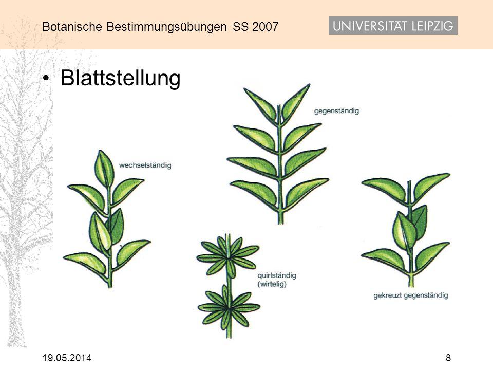 Botanische Bestimmungsübungen SS 2007 19.05.20148 Blattstellung