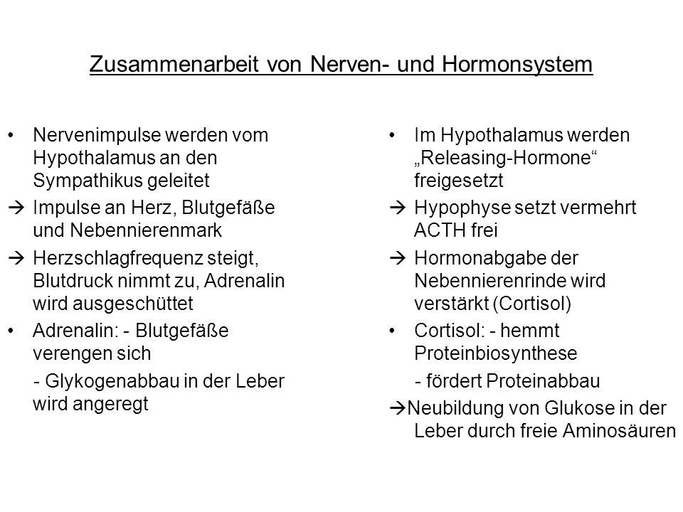 Zusammenarbeit von Nerven- und Hormonsystem Nervenimpulse werden vom Hypothalamus an den Sympathikus geleitet Impulse an Herz, Blutgefäße und Nebennie