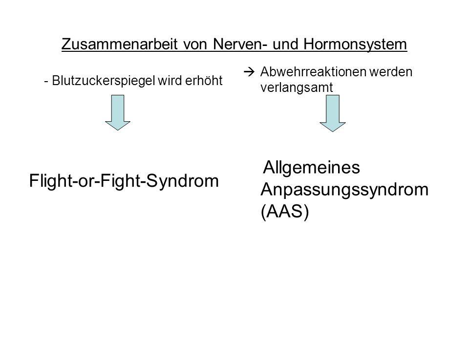 Zusammenarbeit von Nerven- und Hormonsystem - Blutzuckerspiegel wird erhöht Flight-or-Fight-Syndrom Abwehrreaktionen werden verlangsamt Allgemeines An