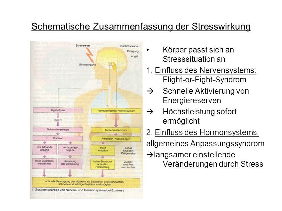 Schematische Zusammenfassung der Stresswirkung Körper passt sich an Stresssituation an 1. Einfluss des Nervensystems: Flight-or-Fight-Syndrom Schnelle