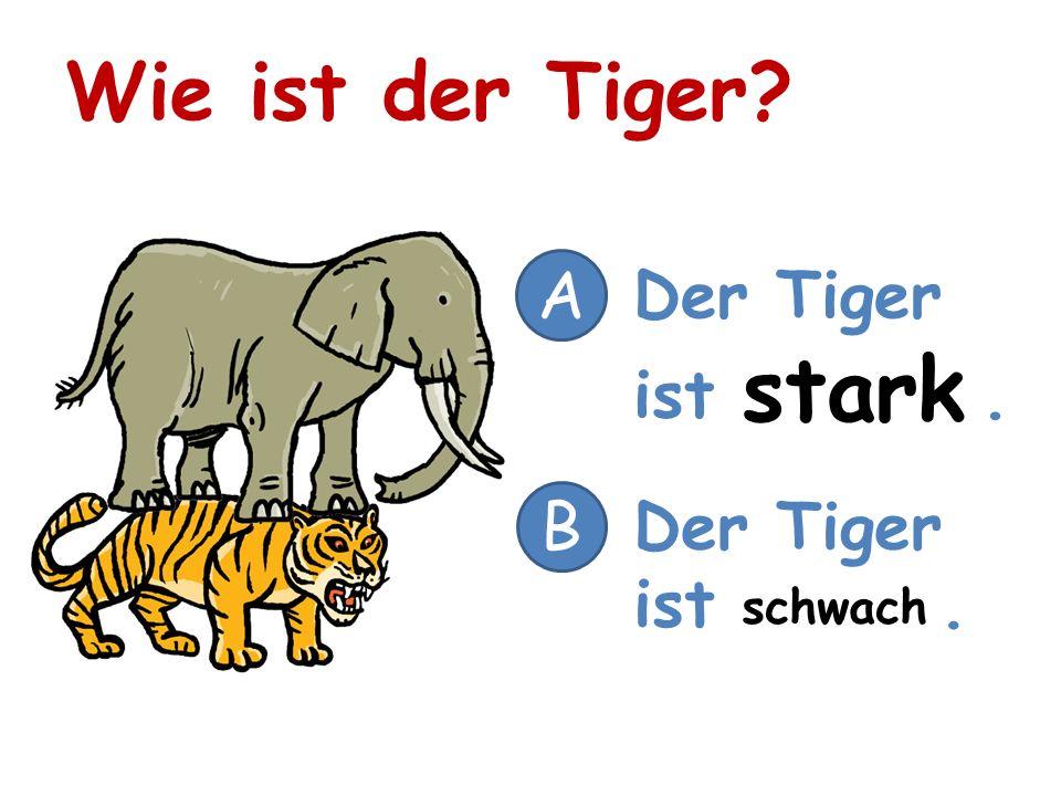 Wie ist der Tiger? A Der Tiger ist. B stark schwach