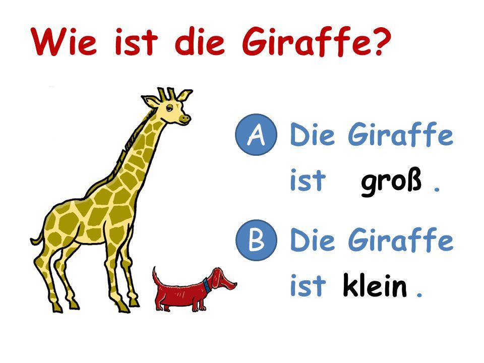 Wie ist die Giraffe? A Die Giraffe ist. B groß klein