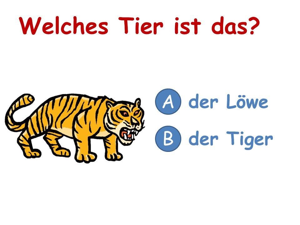 Welches Tier ist das? A der Löwe B der Tiger