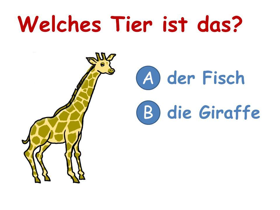 Welches Tier ist das? A der Fisch B die Giraffe