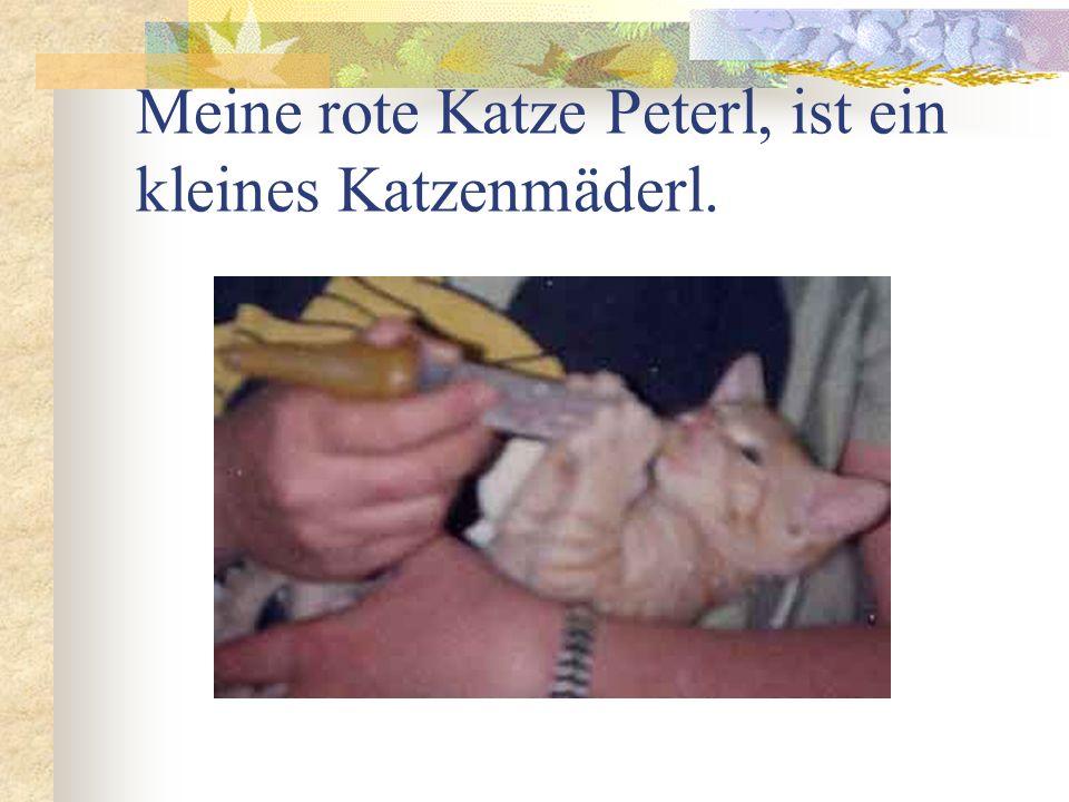 Meine rote Katze Peterl, ist ein kleines Katzenmäderl.