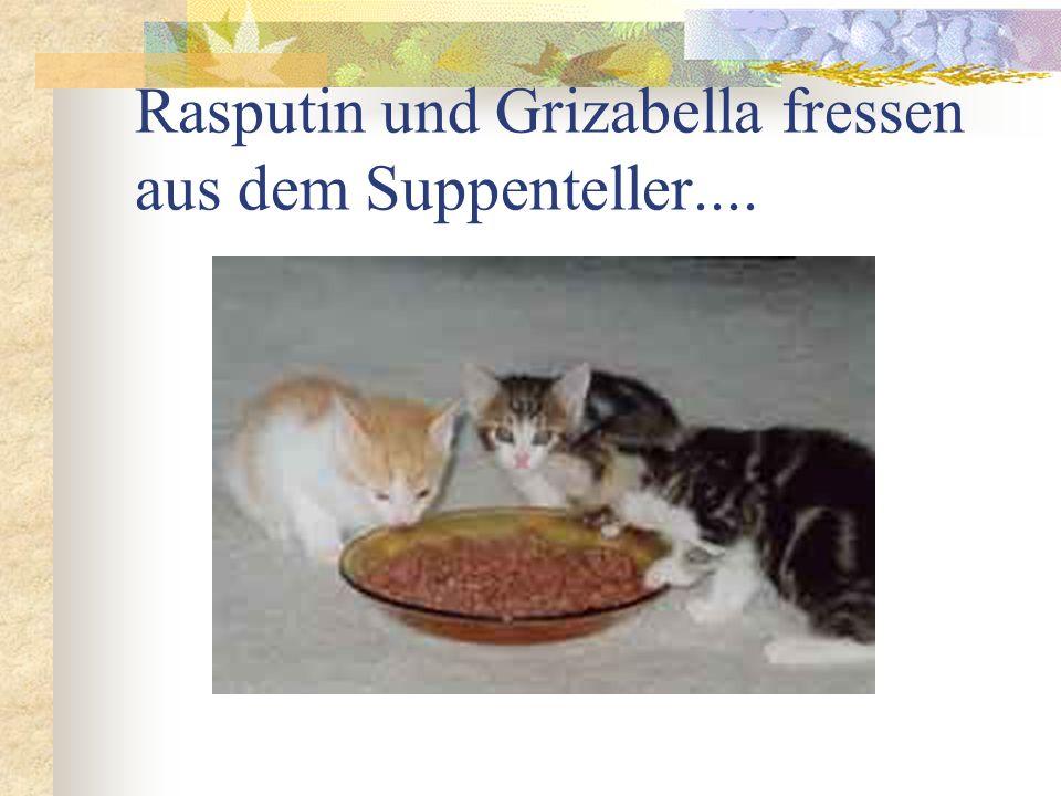 Rasputin und Grizabella fressen aus dem Suppenteller....