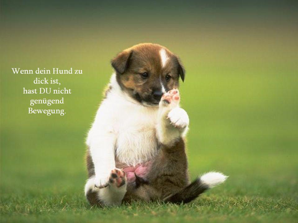 verteilt durch www.funmail2u.dewww.funmail2u.de Mein Hund macht sich über die steigenden Preise Sorgen, weil Doguis pro Paket $3 teurer geworden ist.