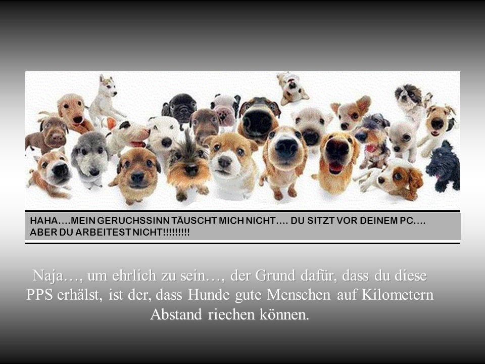 Frauen und Katzen machen, was ihnen gerade gefällt, Hunde und Männer sollten sich entspannt an diesen Fakt gewöhnen. Robert A. Heinlein