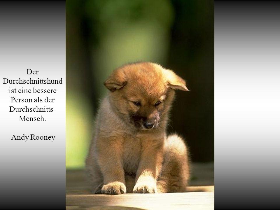 Hunde lieben ihre Freunde und beißen ihre Feinde, im Gegensatz zu den Menschen, die dazu tendieren, Liebe und Hass zu vermischen.