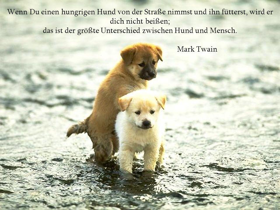 Wenn Du einen hungrigen Hund von der Straße nimmst und ihn fütterst, wird er dich nicht beißen; das ist der größte Unterschied zwischen Hund und Mensch.