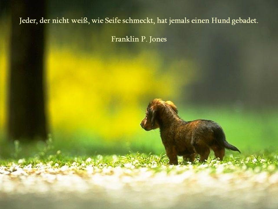 Jeder, der nicht weiß, wie Seife schmeckt, hat jemals einen Hund gebadet. Franklin P. Jones