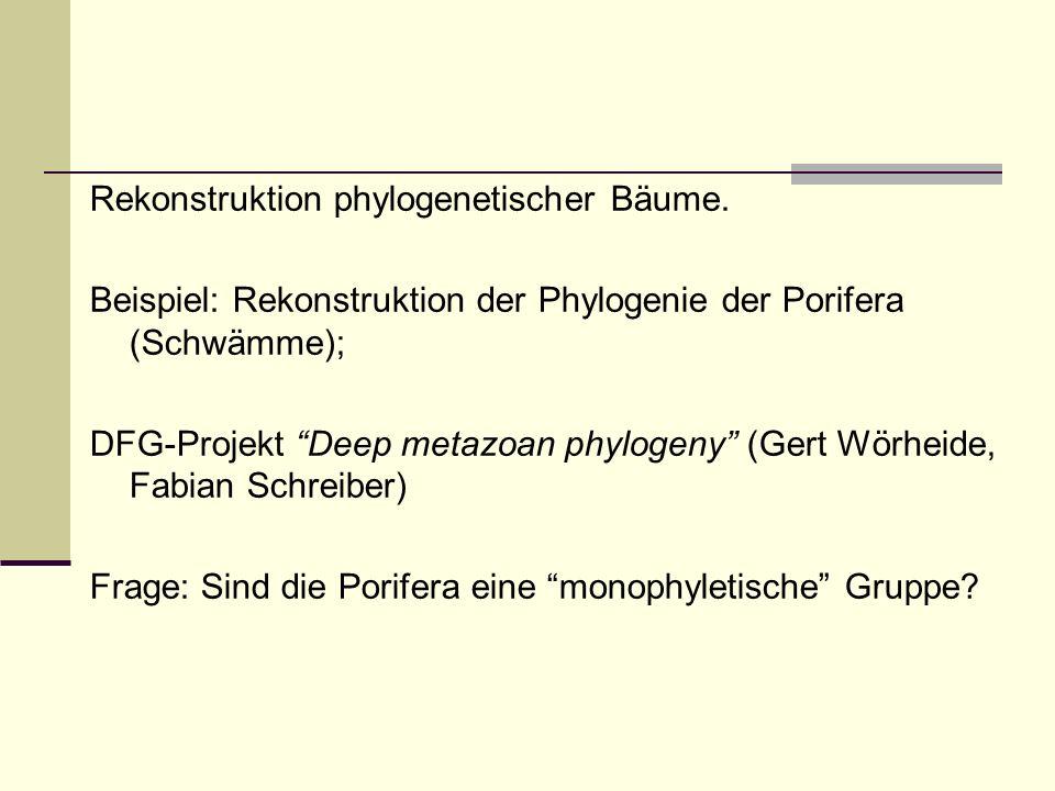Rekonstruktion phylogenetischer Bäume. Beispiel: Rekonstruktion der Phylogenie der Porifera (Schwämme); DFG-Projekt Deep metazoan phylogeny (Gert Wörh