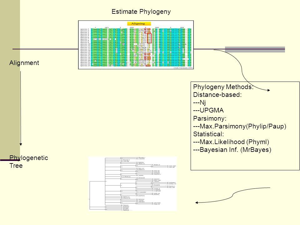 Alignment Phylogenetic Tree Phylogeny Methods: Distance-based: ---Nj ---UPGMA Parsimony: ---Max.Parsimony(Phylip/Paup) Statistical: ---Max.Likelihood