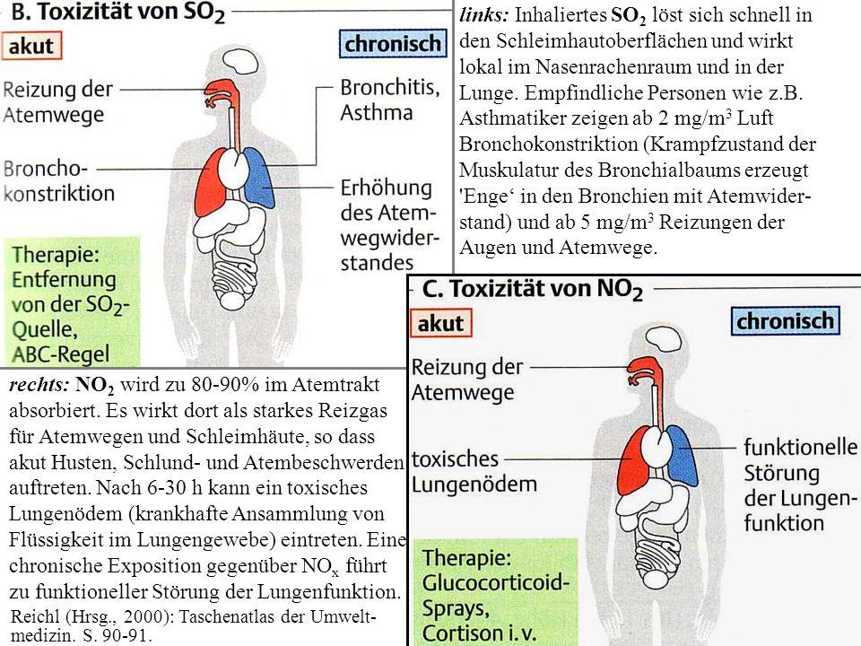 links: Inhaliertes SO 2 löst sich schnell in den Schleimhautoberflächen und wirkt lokal im Nasenrachenraum und in der Lunge. Empfindliche Personen wie