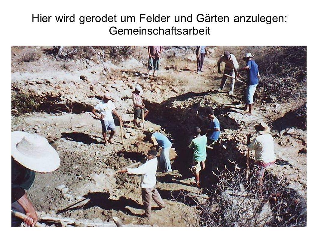 Die große Zisterne: Wasser für die Bewässerung von angelegten Gärten