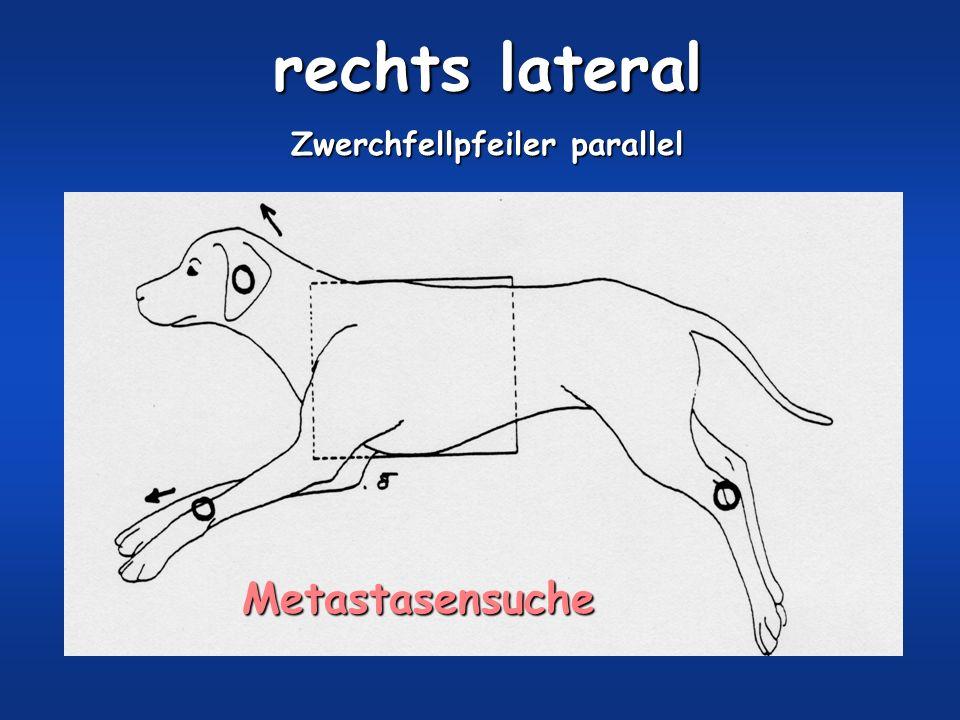 rechts lateral Zwerchfellpfeiler parallel Metastasensuche