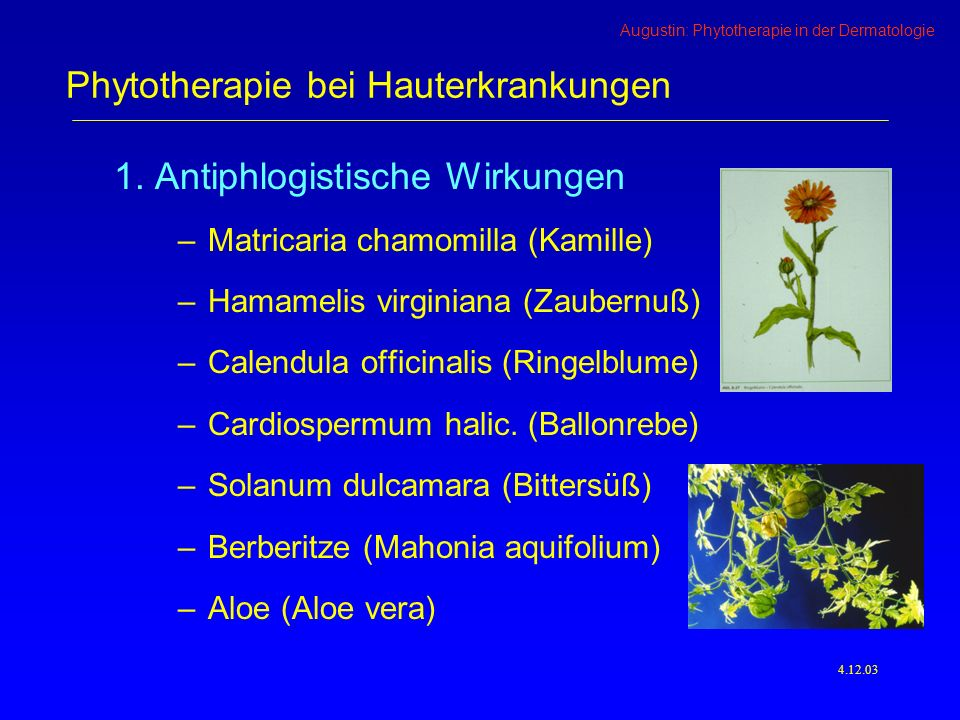 Augustin: Phytotherapie in der Dermatologie 4.12.03 1.