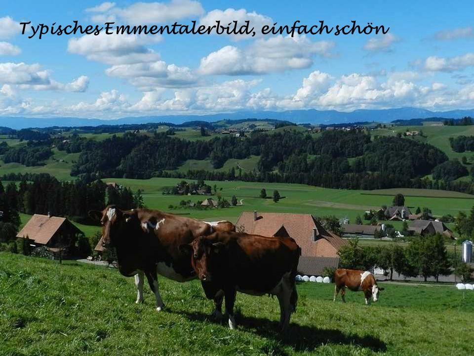 Büren an der Aare, im Berner Seeland