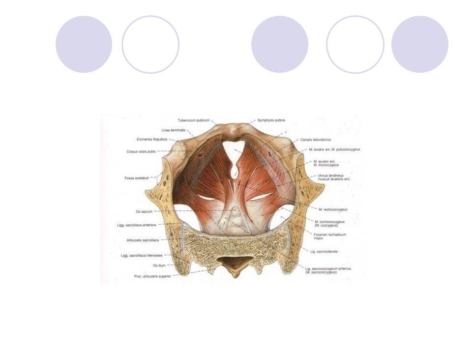Konstipation Verminderte Darmbeweglichkeit Funktionellen Entleerungsschwierigkeiten – das heisst - es kann an einer Dyssynergie der willkürlichen Rektum/Sphinkter- muskulatur und an der Beckenbodenmuskulatur liegen.