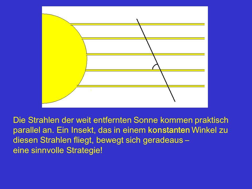 Die Strahlen der weit entfernten Sonne kommen praktisch parallel an. Ein Insekt, das in einem konstanten Winkel zu diesen Strahlen fliegt, bewegt sich