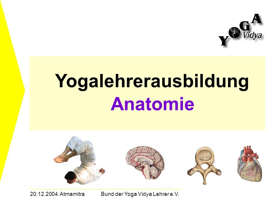 20.12.2004 Atmamitra Bund der Yoga Vidya Lehrer e.V. Yogalehrerausbildung Anatomie