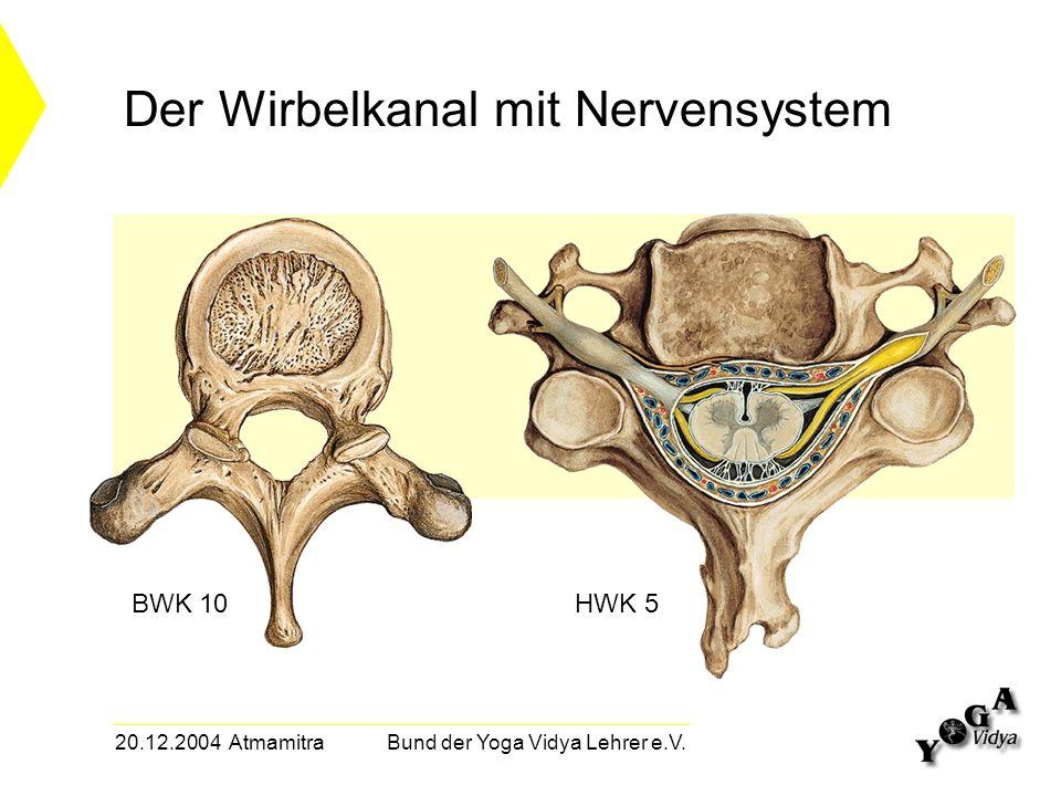 20.12.2004 Atmamitra Bund der Yoga Vidya Lehrer e.V. Der Wirbelkanal mit Nervensystem BWK 10HWK 5