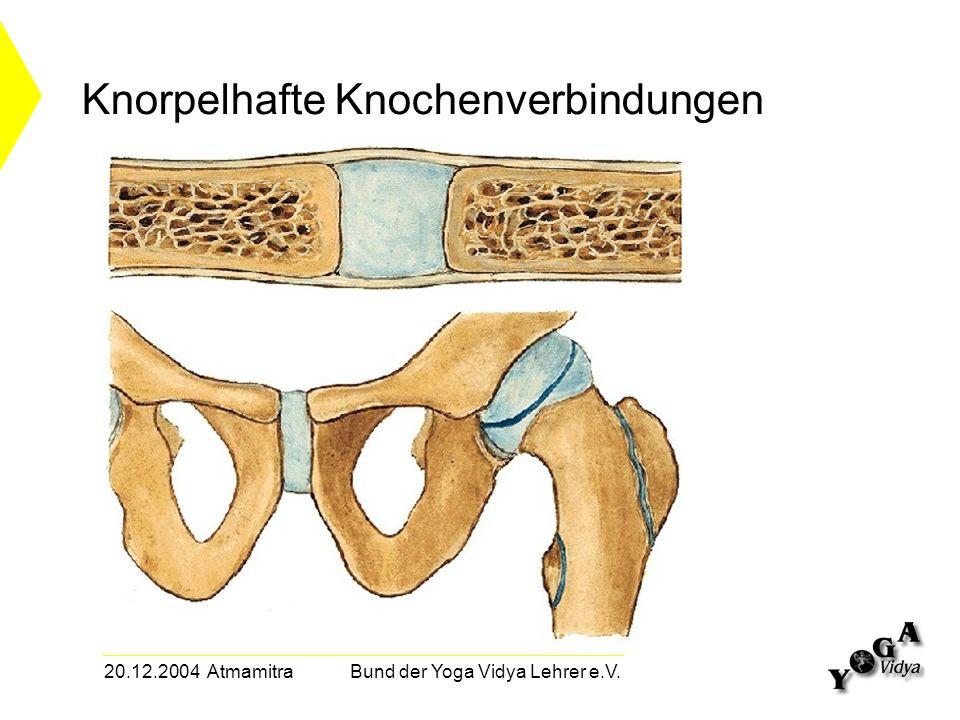 20.12.2004 Atmamitra Bund der Yoga Vidya Lehrer e.V. Knorpelhafte Knochenverbindungen