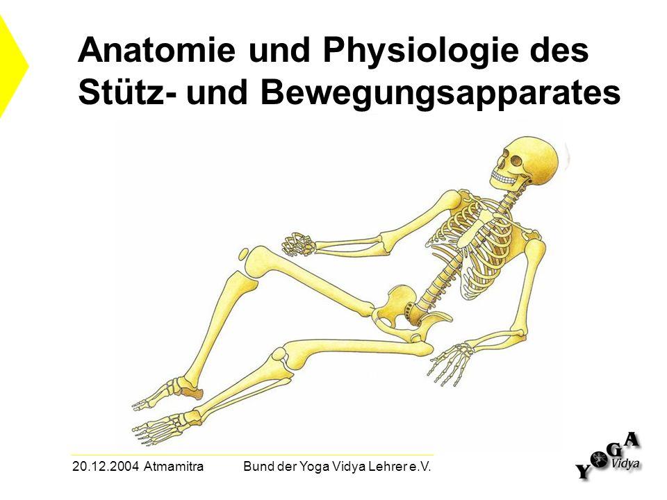 20.12.2004 Atmamitra Bund der Yoga Vidya Lehrer e.V. Anatomie und Physiologie des Stütz- und Bewegungsapparates