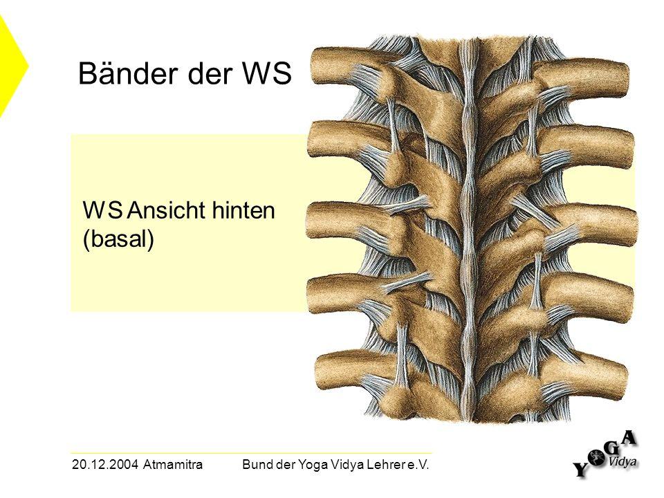20.12.2004 Atmamitra Bund der Yoga Vidya Lehrer e.V. Bänder der WS WS Ansicht hinten (basal)