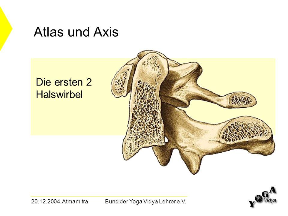20.12.2004 Atmamitra Bund der Yoga Vidya Lehrer e.V. Atlas und Axis Die ersten 2 Halswirbel