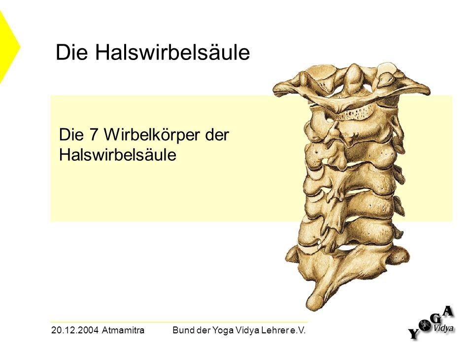 20.12.2004 Atmamitra Bund der Yoga Vidya Lehrer e.V. Die 7 Wirbelkörper der Halswirbelsäule Die Halswirbelsäule