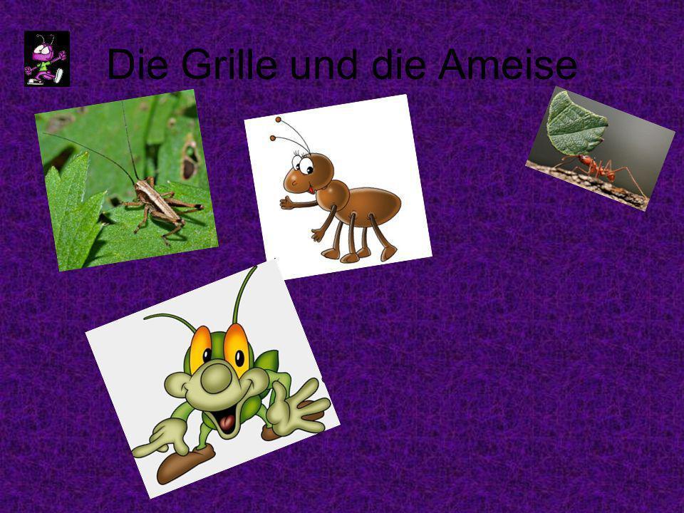 Die Grille und die Ameise
