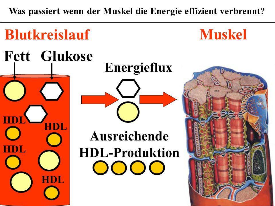 Was passiert wenn der Muskel die Energie effizient verbrennt.