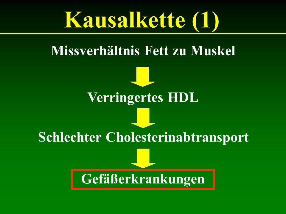 Kausalkette (1) Missverhältnis Fett zu Muskel Verringertes HDL Schlechter Cholesterinabtransport Gefäßerkrankungen