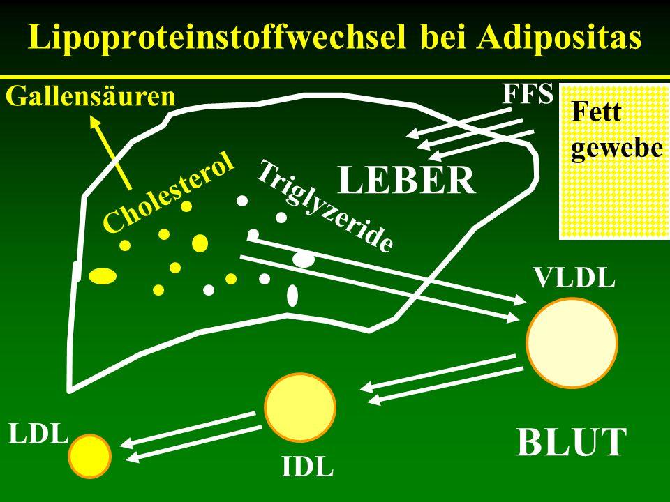 Lipoproteinstoffwechsel bei Adipositas Cholesterol Triglyzeride Gallensäuren VLDL IDL LDL FFS BLUT Fett gewebe LEBER