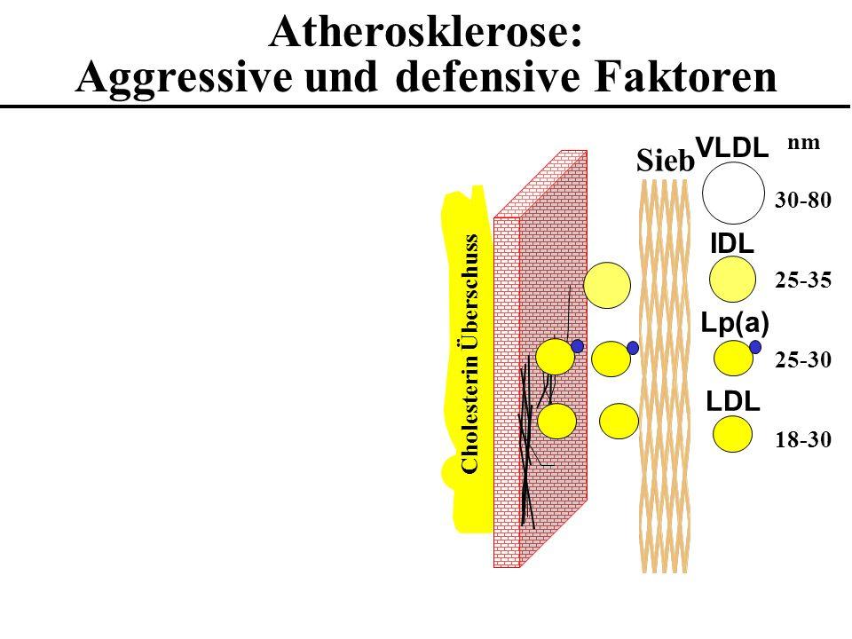 Atherosklerose: Aggressive und defensive Faktoren Cholesterin Überschuss VLDL IDL LDL Lp(a) Sieb 18-30 25-30 25-35 30-80 nm