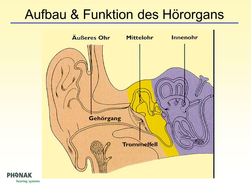 Frequenzzerlegung in der Cochlea